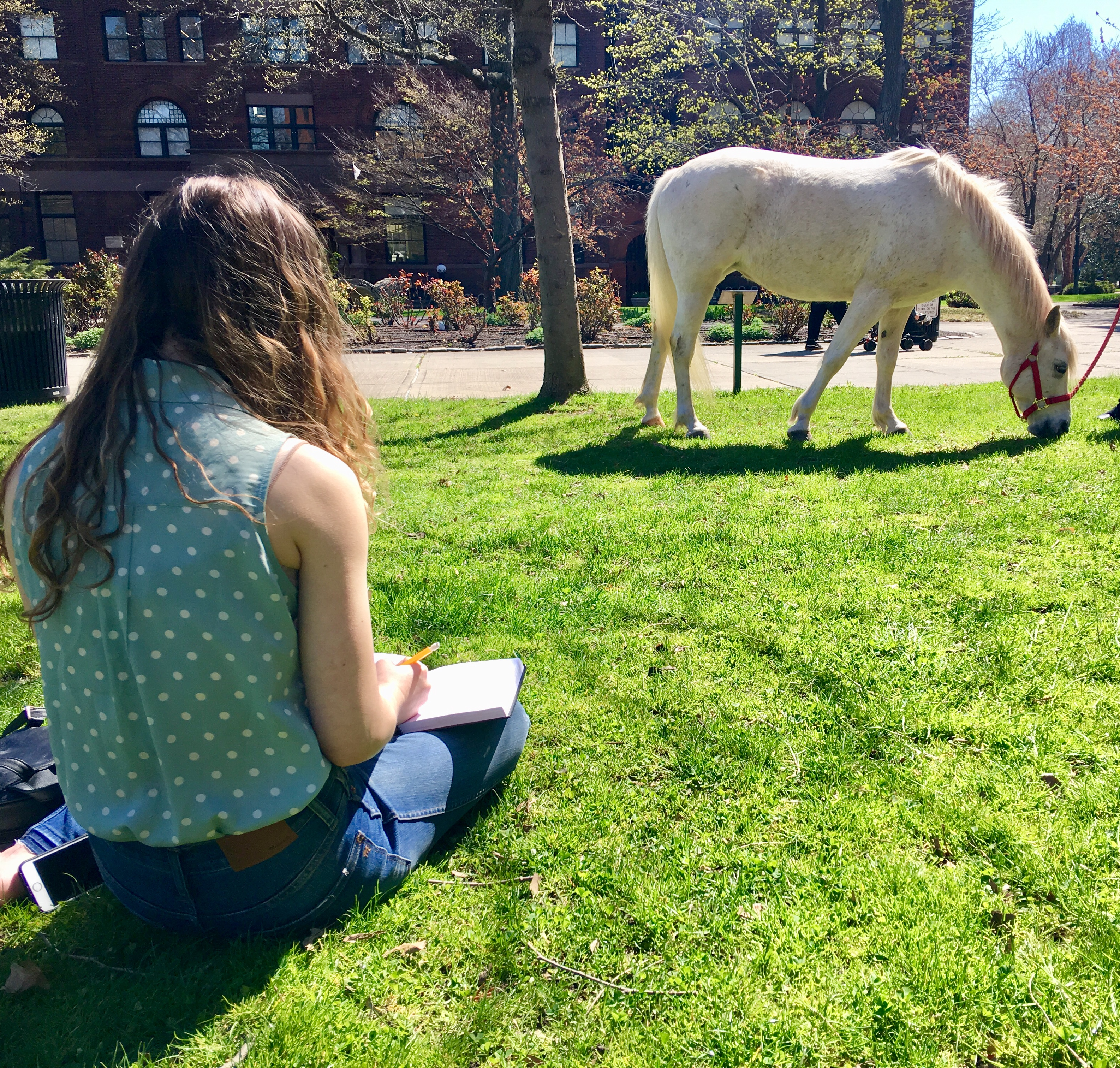 Students drawing horses on campus