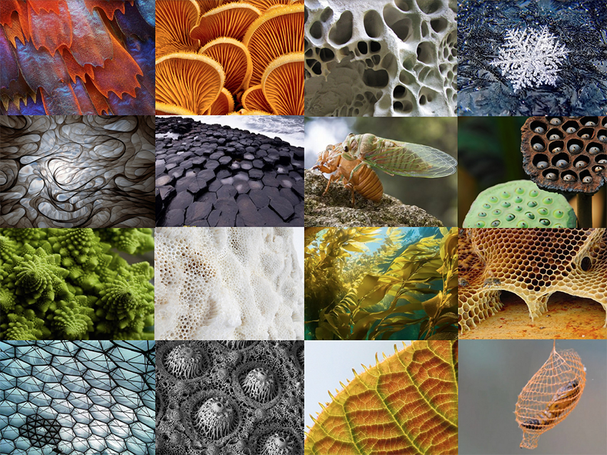 Collage of shapes that occur in nature