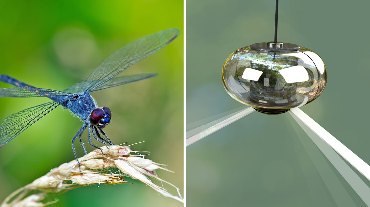 Dragonfly on a plant compared to the Wing Guard device