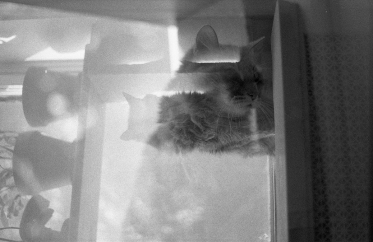 Black-and-white double-exposure of gray cat perched on a windowsill with potted plants