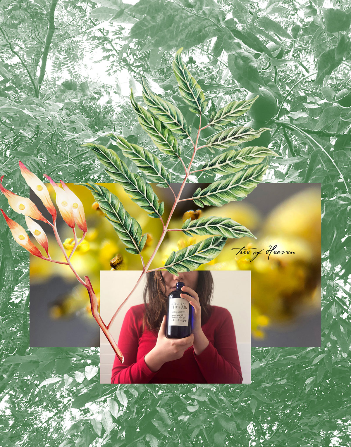 Collage of someone smelling a bottle with background of foliage images