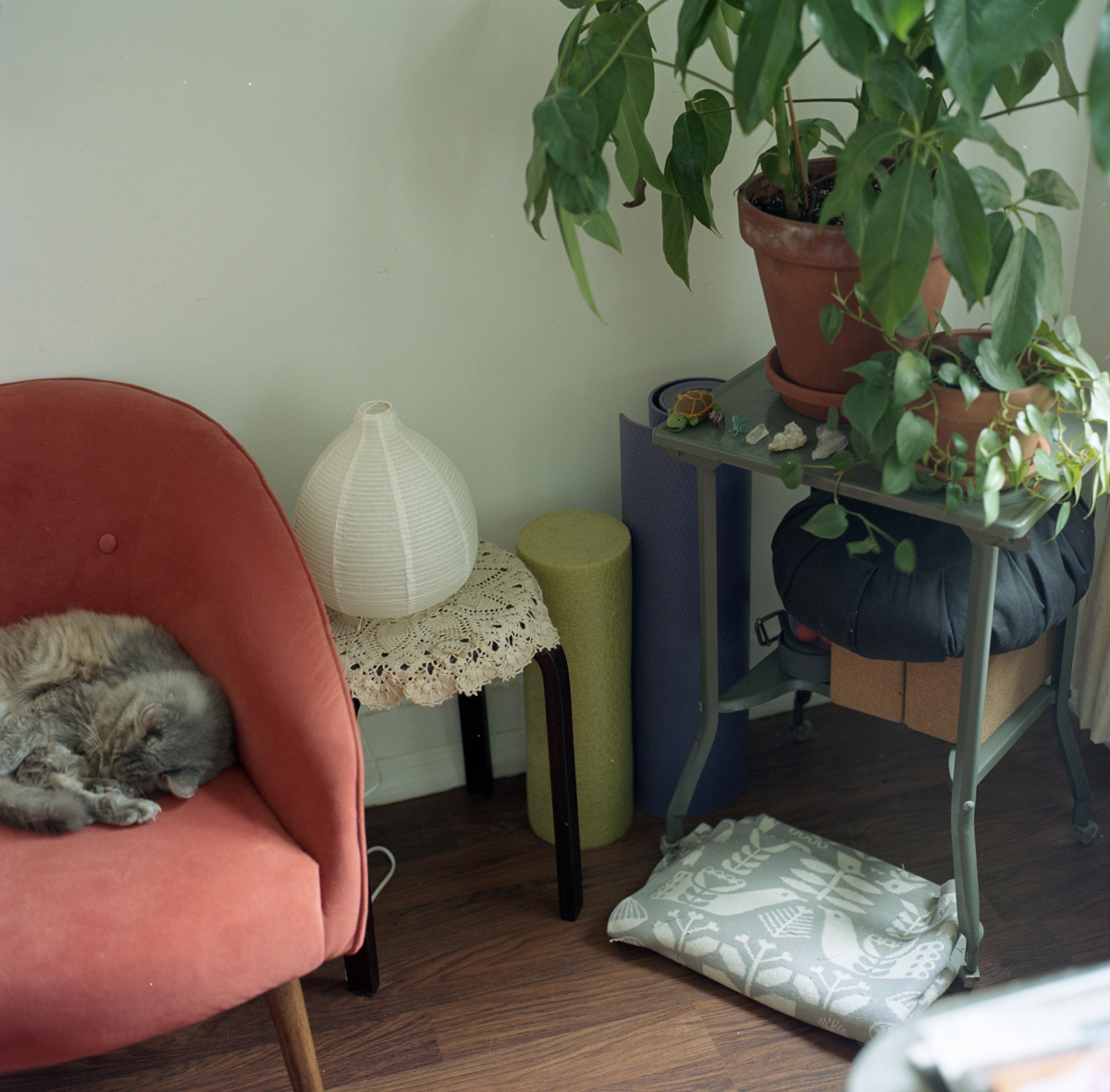 Fluffy gray cat curled on coral-colored armchair next to lamp with paper shade, potted plants, and yoga equipment