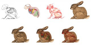 Rabbit Anatomy Educational Puzzle