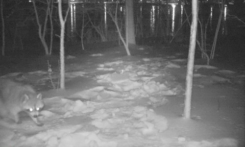 Students Explore Intersections of Photography and Wildlife Conservation with Camera Traps