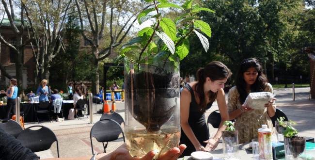 From a Hike Play to Hydroponic Plants, Blue Week Offered Hands-On Experiences in Sustainability
